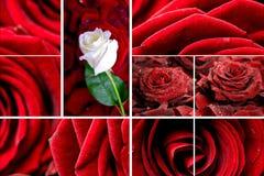 Mosaico adorabile delle rose Fotografia Stock