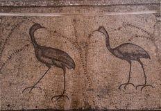 Mosaico antiguo Iglesia de la multiplicación de los panes y del t Foto de archivo
