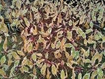 Mosaico da árvore do bolo de casamento Foto de Stock Royalty Free