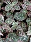 Mosaico da folha no rosa Imagens de Stock