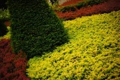 Mosaico da planta Foto de Stock Royalty Free
