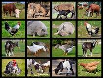 Mosaico de los animales del campo Foto de archivo