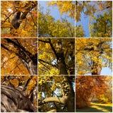 Mosaico degli alberi di autunno Fotografia Stock