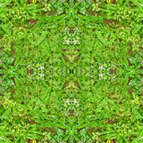 Mosaico del modelo del collage de la naturaleza de Digitaces Foto de archivo libre de regalías