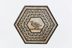 Mosaico romano di Gallo su una parete in en gallone di Romain del san immagini stock