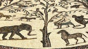 Mosaiken av det romerska forntida fördärvar av den Volubilis staden i Unesco, Marocko lager videofilmer