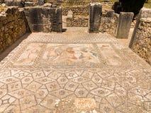 Mosaiker på Volubilis Marocko Arkivfoton