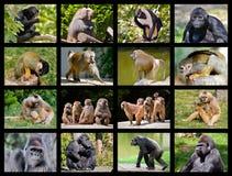 Mosaikfotos von Affen Stockbild