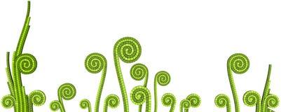 mosaikväxter stock illustrationer