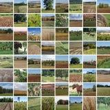 Mosaique сельской местности падения Стоковое фото RF