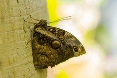 Mosaiska modeller på fjärilsvingar Arkivbild