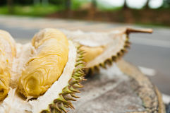 Mosang King Durian Fruit Stock Image