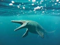 Mosasaurus, lagarto aquático de 17m, entre 70 e 66 milhão anos há Fotos de Stock Royalty Free