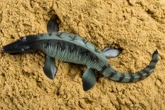 Mosasaurus on sand. Concept of historical animal excavating royalty free stock photos