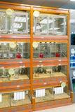 Moscú, Rusia - 16 de abril 2016 Las ratas y los pájaros en tienda del animal doméstico de cuatro patas Imagen de archivo libre de regalías