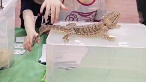 Moscú, Rusia - 13 de abril de 2019: Niños que acarician el lagarto australiano barbudo del Agama del dragón que se sienta en una  almacen de metraje de vídeo