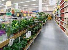 MOSCÚ, RUSIA - 15 DE FEBRERO DE 2015: Plantas en conserva en la tienda Leroy Merlin Leroy MERLIN Fotografía de archivo libre de regalías