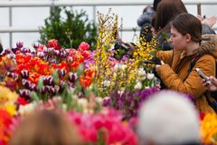 MOSCÚ, RUSIA - 12 DE MARZO DE 2018: Visitantes en el ensayo del ` de la exposición del ` de la primavera en ` del jardín de Aptek Imágenes de archivo libres de regalías