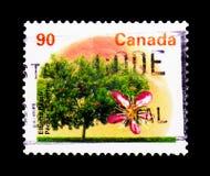 MOSCÚ, RUSIA - 24 DE NOVIEMBRE DE 2017: Un sello impreso en Canadá sh Imagen de archivo libre de regalías