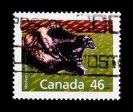 MOSCÚ, RUSIA - 24 DE NOVIEMBRE DE 2017: Un sello impreso en Canadá sh Fotos de archivo libres de regalías