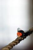 A mosca Imagem de Stock Royalty Free