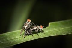 mosca Imagens de Stock