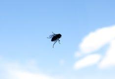 mosca Fotografia de Stock Royalty Free