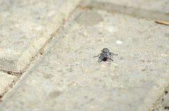 mosca Imagem de Stock