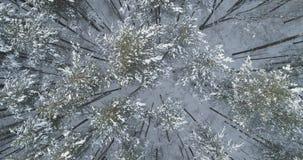 Mosca aérea de la visión superior sobre bosque congelado del mixeb con los árboles del pino y de abedul Imagenes de archivo
