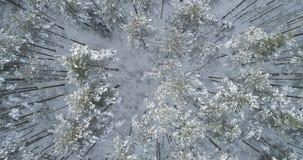 Mosca aérea de la visión superior sobre bosque congelado del mixeb con los árboles del pino y de abedul Foto de archivo libre de regalías