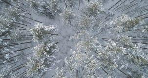 Mosca aérea de la visión superior sobre bosque congelado del mixeb con los árboles del pino y de abedul Imágenes de archivo libres de regalías