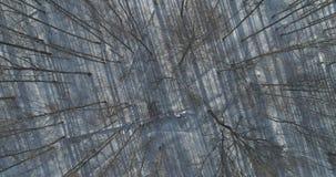 Mosca aérea de la visión superior sobre bosque desnudo del abedul en un día de invierno soleado Imagen de archivo libre de regalías