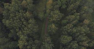 Mosca aérea del tiro sobre parque o bosque salvaje en día nublado imagen de archivo libre de regalías
