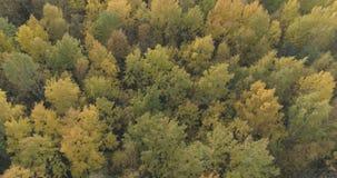 Mosca aérea sobre bosque amarillo del otoño en un día nublado Imagen de archivo libre de regalías