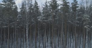 Mosca aérea sobre bosque congelado del mixeb con los árboles del pino y de abedul Fotografía de archivo libre de regalías