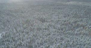 Mosca aérea sobre bosque congelado del mixeb con los árboles del pino y de abedul Imágenes de archivo libres de regalías