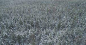 Mosca aérea sobre bosque congelado del mixeb con los árboles del pino y de abedul Fotos de archivo