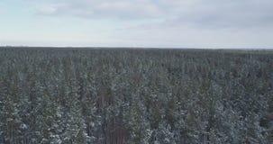 Mosca aérea sobre bosque congelado del mixeb con los árboles del pino y de abedul Imagen de archivo