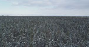 Mosca aérea sobre bosque congelado del mixeb con los árboles del pino y de abedul Foto de archivo libre de regalías