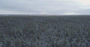 Mosca aérea sobre bosque congelado del mixeb con los árboles del pino y de abedul Imagenes de archivo