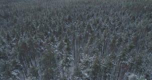 Mosca aérea sobre bosque congelado del mixeb con los árboles del pino y de abedul Fotografía de archivo