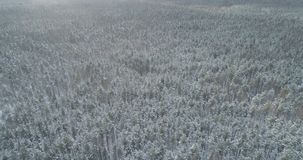 Mosca aérea sobre bosque congelado del mixeb con los árboles del pino y de abedul Fotos de archivo libres de regalías