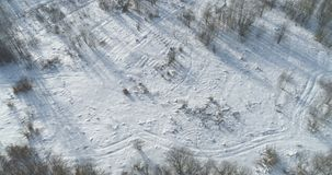 Mosca aérea sobre bosque desnudo del abedul en un día de invierno soleado Fotos de archivo libres de regalías
