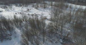Mosca aérea sobre bosque desnudo del abedul en un día de invierno soleado Imagen de archivo