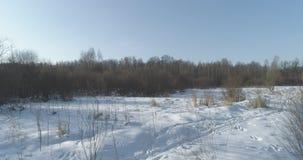 Mosca aérea sobre bosque desnudo del abedul en un día de invierno soleado Foto de archivo