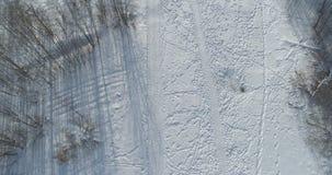 Mosca aérea sobre bosque desnudo del abedul en un día de invierno soleado Imágenes de archivo libres de regalías