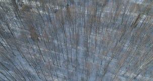 Mosca aérea sobre bosque desnudo del abedul en un día de invierno soleado Fotografía de archivo