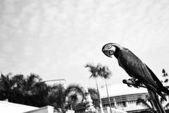 mosca ao céu Foto de Stock