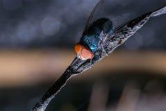 mosca ascendente pr?xima na corda suja dentro da casa na parte de tr?s do bokeh foto de stock royalty free