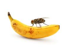 Mosca casera que se sienta en plátano Foto de archivo libre de regalías